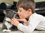 Before Billy the stray cat came along, four-year-old Fraser, who is autistic, struggled with simple tasks