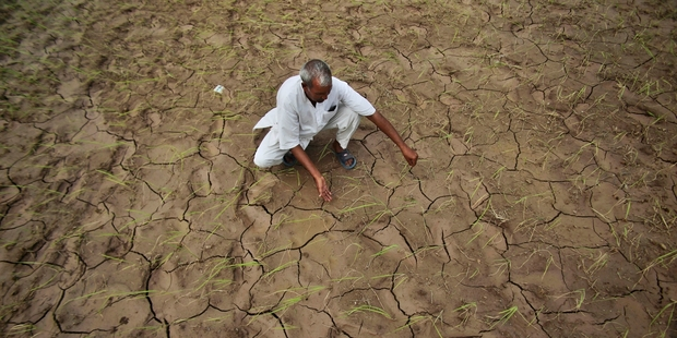 An Indian farmer shows a dry, cracked paddy field in Ranbir Singh Pura, 34km from Jammu, India. Pictures / AP